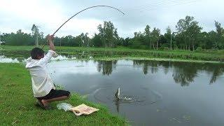 Fishing with hook | Best Fish Hunting Video (Part-6)