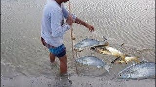 Lot of Fish Hunting Videos By Fishing Net || Current Net fish catching p16