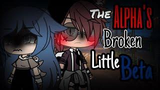 The alpha's broken little beta | Gacha life | GLMM | Gacha life mini movie | 40k special |