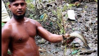 Awesome Big Shol Fish Hunting By Hand II Traditional Hand Fishing II Best Hand Fishing Video