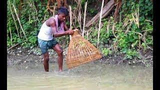 Live Fish Hunting With Polo || Traditional fish Hunting Technique By MR Fishing Life