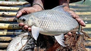 Cast Net Fishing video।Big Fish hunting by cast net।Net Fishing in the Village (part-99)