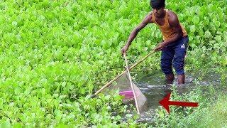 Fish Hunting || The Tremendous View Of Fishing By The Mesh Net || Net Fish Catching.