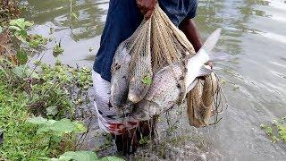 Best Net Fishing  Big Fish Hunting By Cast Net  Net Fishing in the Village Part 73