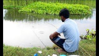 Traditional Fish hunting in village Canal||Fish hunting at the Canal with beautiful natural (Part-1)