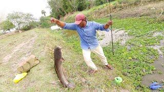 Fish hunting||Big catfish and chitala fish catch