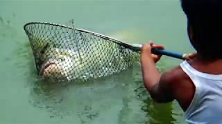 15 KG Big Catla Fish Hunting And Fishing Videos By Sagor In Hatiar Dighi